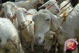Pemkab Sigi salurkan bantuan 1.000 ekor ternak