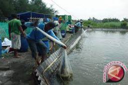 Ratusan Hektare Tambak Dan Sawah Disapu Banjir