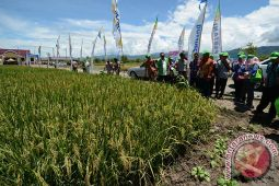 Central Sulawesi Has Surplus Production Of Rice Commodity