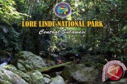 Wabup : TNLL Harus Bersinergi Amankan Hutan Lindung