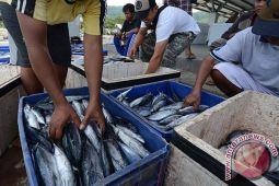 Harga ikan di Palu naik akibat cuaca