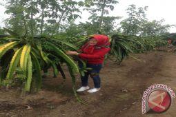 Nasdem Sulteng Kembangkan Pertanian Berbasis Wisata Pendidikan