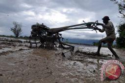 453 hektare sawah tadah hujan Parigi Moutong