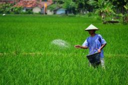 Bencana gempa tidak pengaruhi pertanian padi di Parigi Moutong
