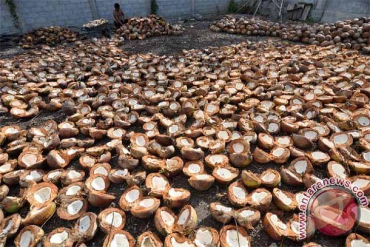 Sulteng antarpulau kopra ke Gorontalo dan Sulut