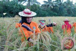 Buton Utara jadikan pertanian organik program unggulan