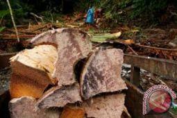 FAO Bentuk Kelompok Usaha Sagu di Sultra