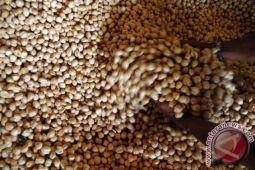 Di Kendari, harga kemiri kupas Rp40.000/kg