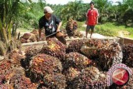 Petani sawit tunggu investor industri pengolahan hasil