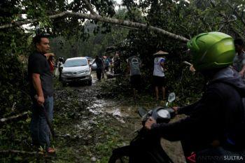 Pohon Tumbang Di Jalan Trans Sulawesi