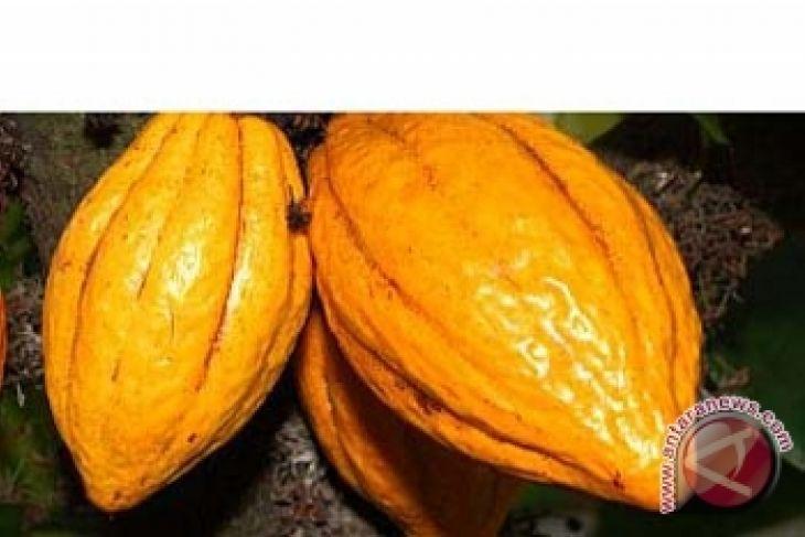 Kolaka Utara to revitalize 43 thousand hectares of cacao plantations