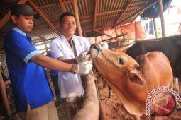 Pakar: Teledor menyembelih sebabkan daging tidak halal