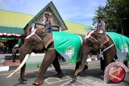 Gajah Lampung sambut kirab obor Asian Games