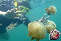SAR Parangkritis pastikan ubur-ubur sudah tidak muncul