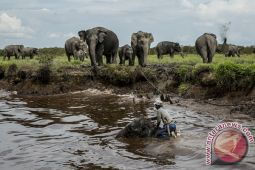 Balada Gajah Sumatera