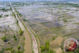 Ribuan hektare sawahdi OKU belum di garap