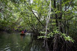 Wisatawan disuguhi hutan bakau jelang Tanjung Lesung