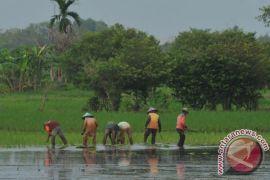 Kelompok tani  Ogan Komering Ulu terima bantuan bibit