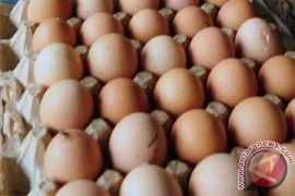 Kenaikan harga telur ayam diprediksi berlangsung lama