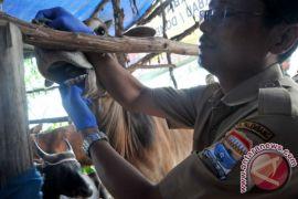 Dinas Peternakan OKU periksa hewan kurban