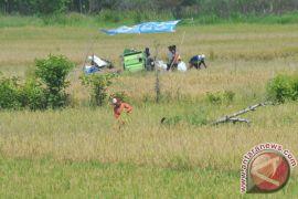 Muratara target surplus beras lebih dari 5.000 ton