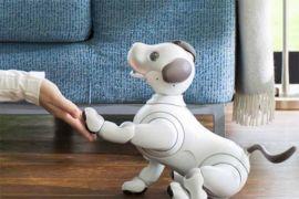 Robot anjing aibo kenali 100 wajah manusia