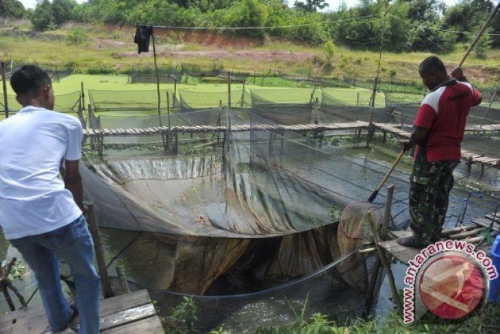 Jejak indonesia OKU dibantu 16.000 bibit lele