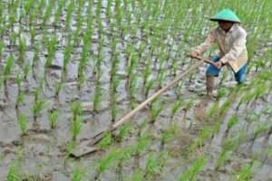 Kepemilikan lahan 0,5 hektare didominasi petani
