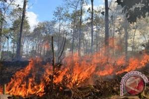 Tiga Hektare Hutan Lereng Sumbing Terbakar