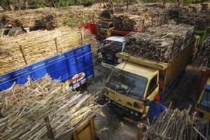 Pabrik Gula Tanpa Dukungan Lahan Diusulkan Ditutup