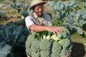 Konsumsi Brokoli Bagus untuk Kesehatan Usus