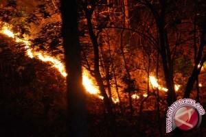 15 Hektare Kawasan Hutan Lindung di Gunung Sumbing Terbakar