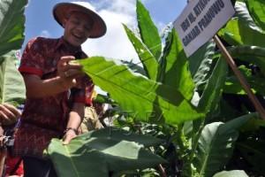 Jelang Panen, Pabrik Rokok Belum Pastikan Kuota Pembelian Tembakau