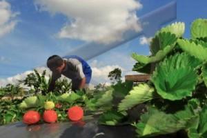 Pemprov Jateng Perkuat Agrowisata Desa Serang Purbalingga