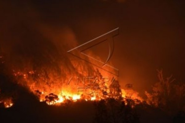 300 pendaki terjebak kebakaran hutan di Lawu
