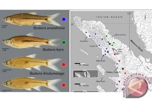 Peneliti: Saat Berenang di Air Keruh Ikan dapat Aktifkan Enzim di Matanya