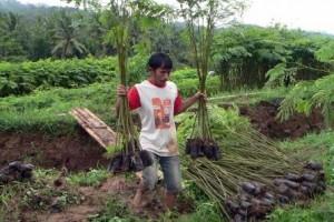 Desa Pengekspor Kayu Sengon Peroleh Bantuan Bibit