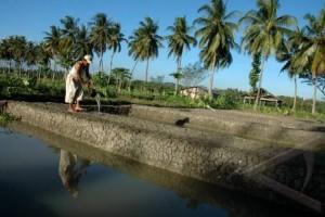 Pembudidaya Ikan Diminta Perhatikan Fluktuasi Suhu