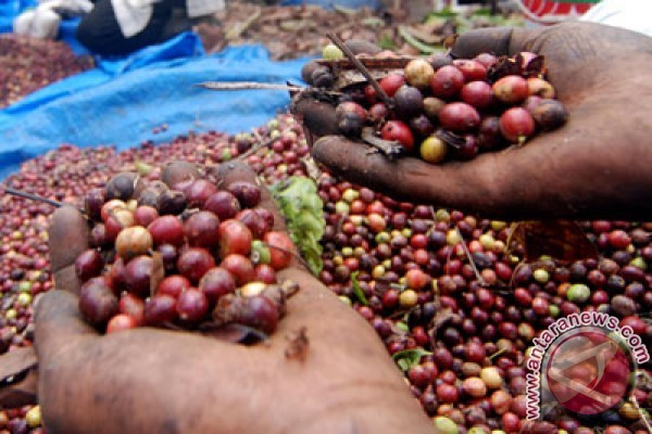 Temanggung Expands Coffee Export Market to Australia