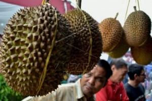 Mijen Dijadikan Agrowisata Durian