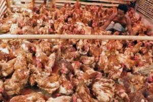 Harga Daging Ayam Ras Naik Picu Inflasi