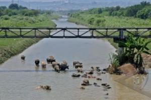 DPRD Semarang: normalisasi sungai jangan merugikan PKL
