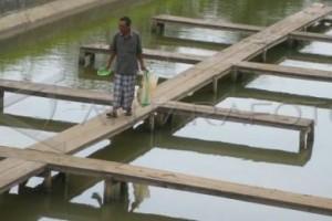 Cuaca Buruk, Nelayan Bisa Budi Daya Ikan Tawar
