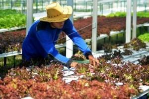 Urban Farming Dukung Ketahanan Pangan