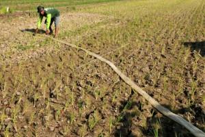 Antisipasi kekeringan lahan pertanian,  embung jadi solusi logis