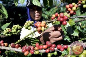 Banjarnegara potensial untuk pengembangan tanaman kopi