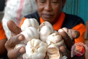 Impor Mudah Penyebab Petani Enggan Tanam Bawang Putih
