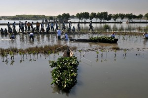 10.000 Mangrove Bantu Atasi Abrasi Semarang