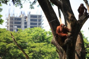 THR Sriwedari-Taman Satwa Taru Jurug Digabung