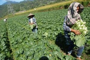Petani Banyumas Didorong Kembangkan Pertanian Organik